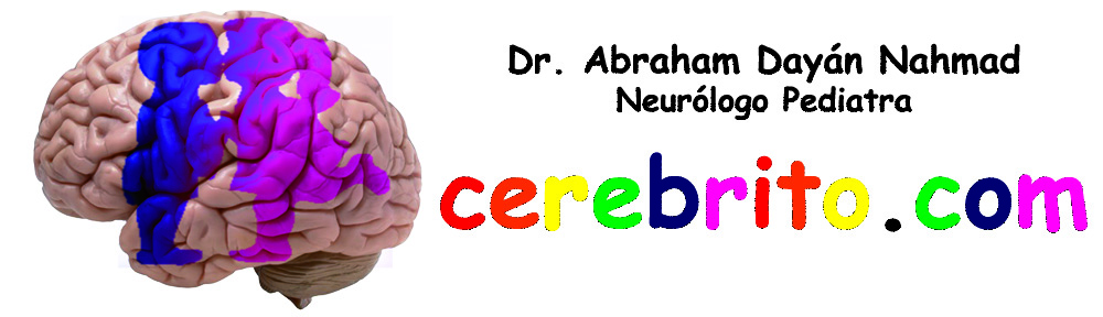 Neuropediatra, Neurólogo Pediatra - cerebrito com s.c. - Ciudad de México, Distrito Federal