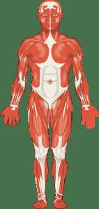 hipotonía Muscular, Bajo Tono Muscular,Sindrome Hipotonico